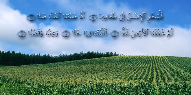 {فَلْيَنْظُرِ الإِنسَانُ إِلَى طَعَامِهِ}
